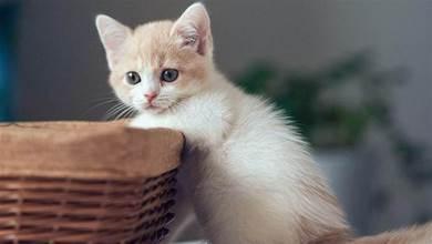時代變了,現在貓咪的天敵不是狗,而是……