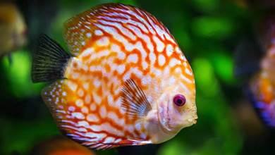 新手養魚做到這6看,挑到的魚條條健康活潑,魚販都說你是老行家!