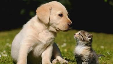 貓狗因爭床開起撕×大戰,輪番互毆…戰況相當激烈,看著都疼!
