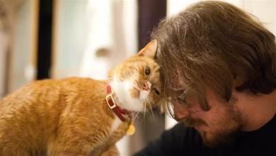 貓咪性格高冷從不給媽抱,結果某天竟主動貼近撒嬌,背後真相竟讓人大吃一驚!