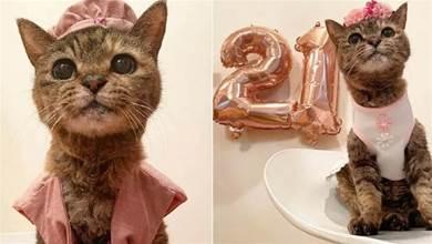 日本21歲長壽貓咪的慶生照少年感滿滿,好萌…