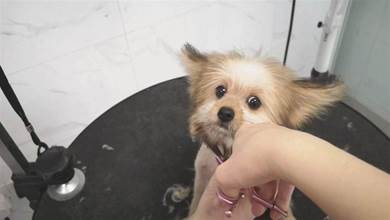 女子只用1招解決困擾,所有狗都能使用,再也不用煩給狗剪毛