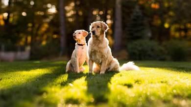 曬出狗子吃飯的照片,其中一隻引人注目,對比太明顯了